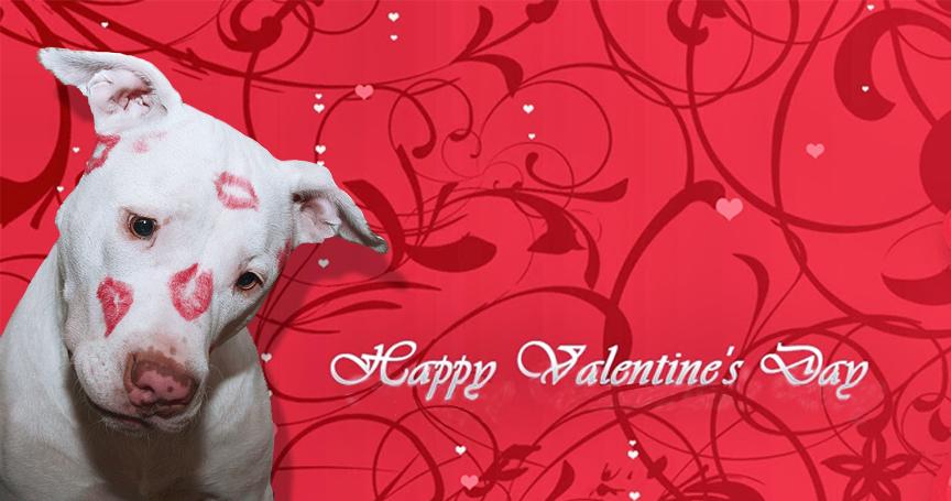 Valentine Newsletter Header image